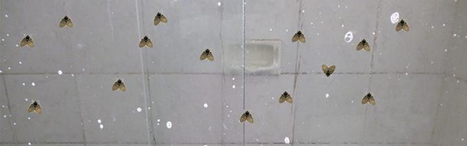 Dicas para acabar com mosquitinhos de banheiro