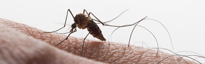 Dengue. A luta para vencê-la continua