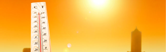 O calor aumentou? Prepare as armas para enfrentar os insetos
