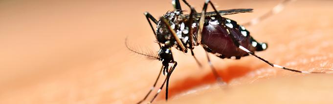 8 maneiras de combater os mosquitos na sua casa