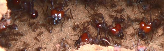 2 dicas para acabar com as formigas